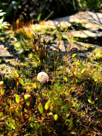Nursing nature UNESCO World Heritage Site Tranquility Baby Snail Beautiful Energy Mobilephotography Nature Growth Grass Day No People Mushroom Outdoors Beauty In Nature