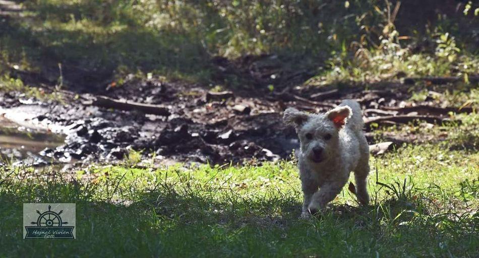 My Dog <3 One Animal Animal Themes Love ♥ Igor Name
