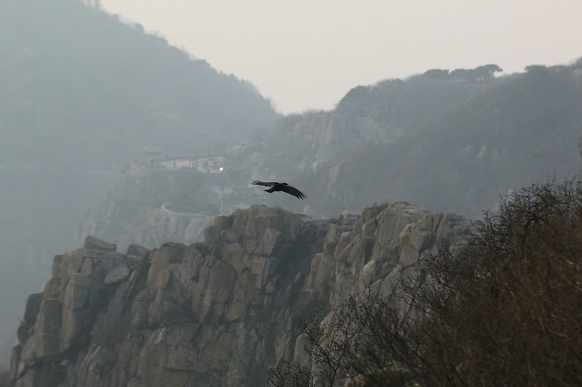 泰安 泰山 Oudside Taian Mountains Eagles