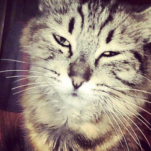 Monster Kitty Catsitting Grumpygills