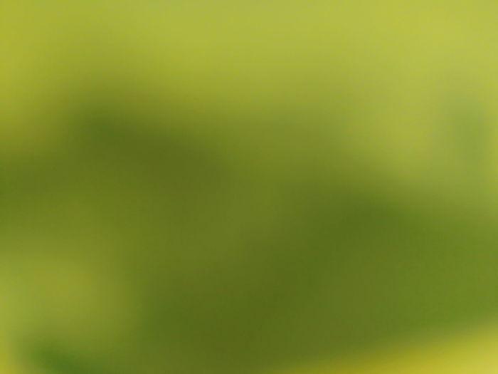 Defocused image of green background