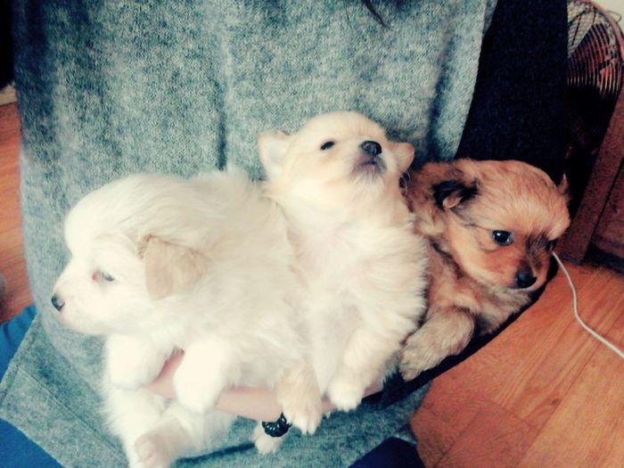 Pets Dogs ㄱ아지