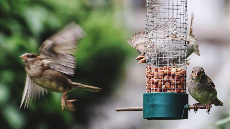 Flying birds, population
