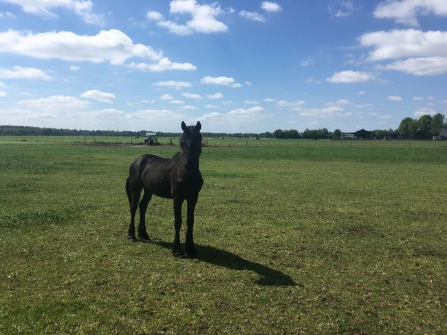 Field Sky Cloud - Sky Nature Grass One Animal Animal Themes Domestic Animals Landscape Outdoors Mammal Green Color Day No People Beauty In Nature Full Length Tree Scenics Horse