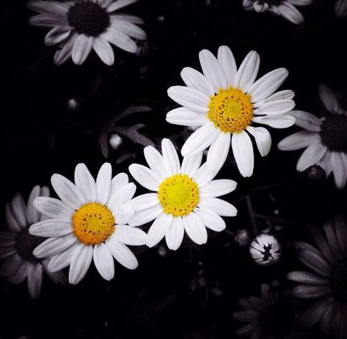 Flower in the world