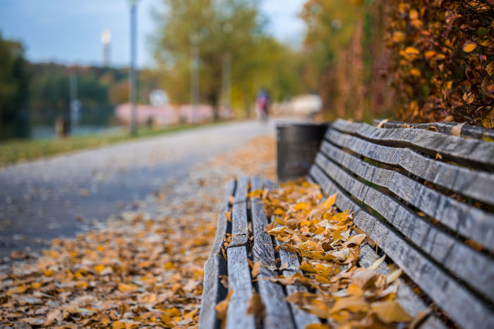 Morning walk in autumn in Berlin, Germany Autumn Leaves Day Morning Sunrise Plant Part Leaf Change Nature Direction The Way Forward Tree Selective Focus Incidental People Plant Falling Footpath Outdoors Dry Road Transportation Focus On Foreground Surface Level Autumn Collection Fall Park Bench