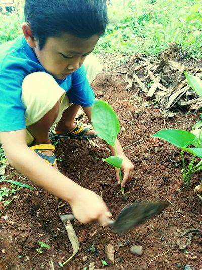 plant Child