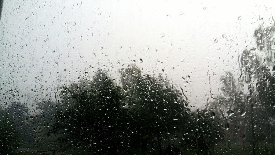 Rain Rainy Day Rain Drops Trees First Eyeem Photo