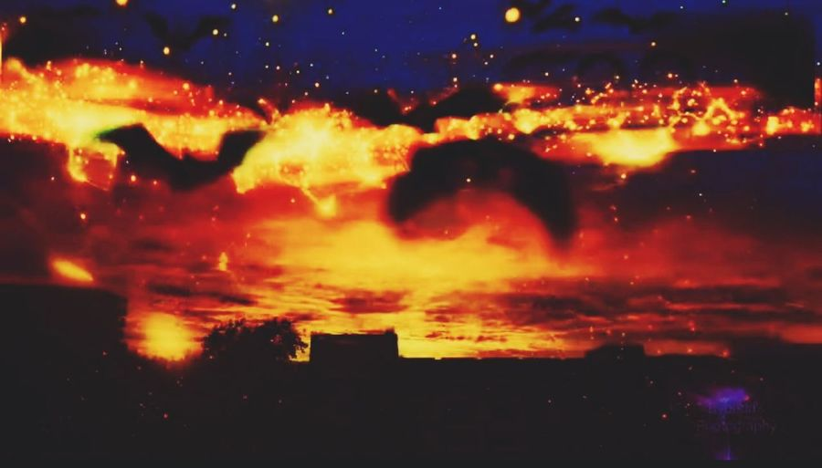 Fire in the sky City Sunset Tree Illuminated Multi Colored Red Awe Silhouette Yellow Dramatic Sky