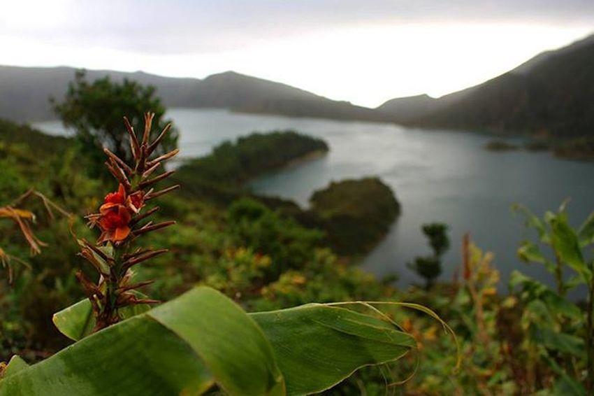 Azores Sao Miguel- Azores Lagoa Do Fogo Nature