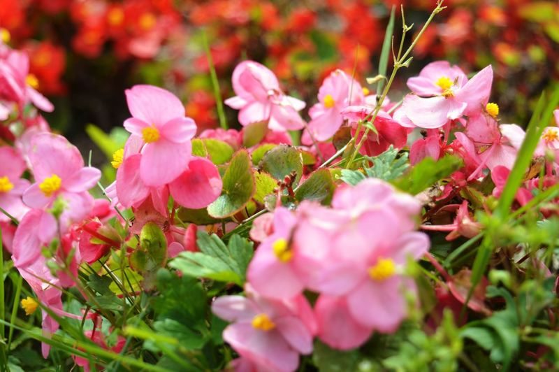 Springtime Plant Pink Color Petal Outdoors No People Nature Leaf Growth Freshness Fragility Flower Head Flower Day Close-up Blooming Beauty In Nature