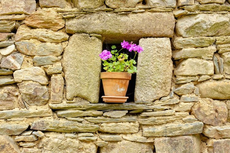 Close-up of flower pot against stone wall