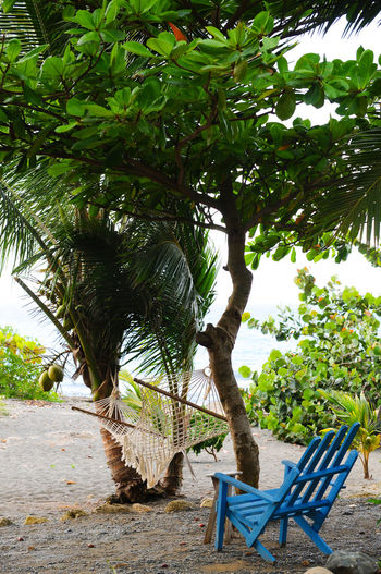 Tree Plant Chair Seat Growth Nature Green Color Day Absence No People Beauty In Nature Land Empty Leaf Outdoors Tranquility Tree Trunk Plant Part Trunk Outdoor Chair Blue Chair Hammock Relaxing Relaxation Beach Sea Idyllic Still Life Positive Palm Tree Easy Living Chilling Chillout