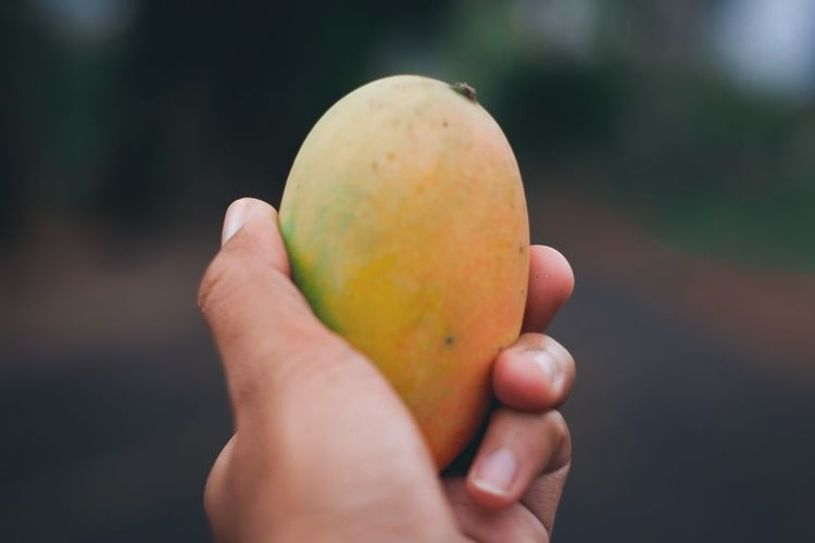 Close-up of human hand holding ripe mango fruit outdoors