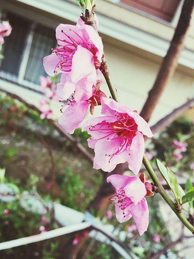 Flowers Spring Flowers Pink Pink Flower