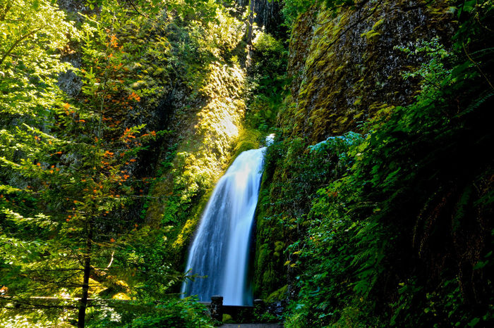 Columbia River Gorge Flowing Flowing Water Forest Green Long Exposure Lush Foliage Motion Oregon Outdoors Photography Relaxing Moments Tree Trees Wah Water Waterfall First Eyeem Photo