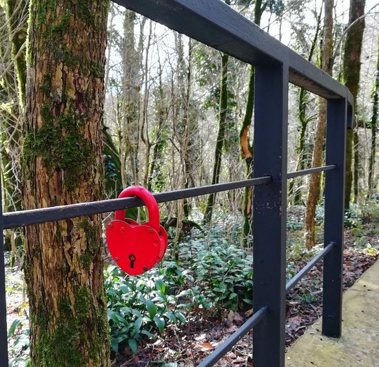 Close-up of padlocks on railing against trees in forest