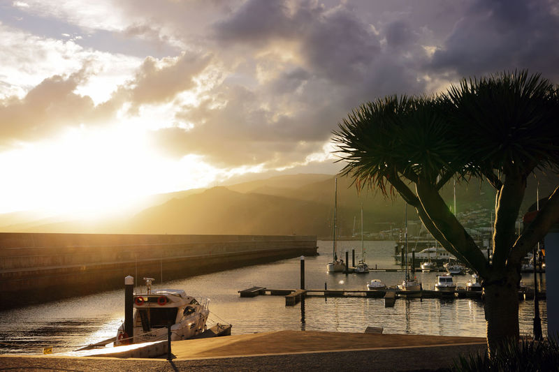 Sunset Madeira Dracaena Draco Harbor Madeira Island Marina Portugal Travel Photography Beauty In Nature Dragon Tree Island Nature Nautical Vessel No People Outdoors Palm Tree Scenics Sea Sun Sunlight Sunset Tranquility Travel Destinations Travelphotography Tree Water