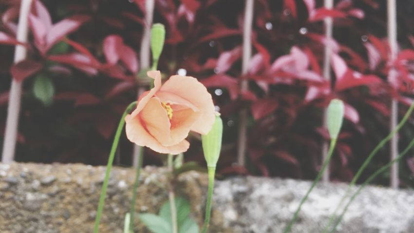 Plant Close-up Flower Vulnerability  Fragility Flowering Plant Beauty In Nature