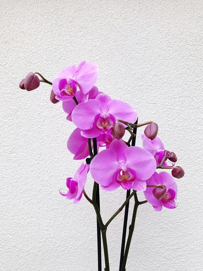 Close-up of pink orchid against sky