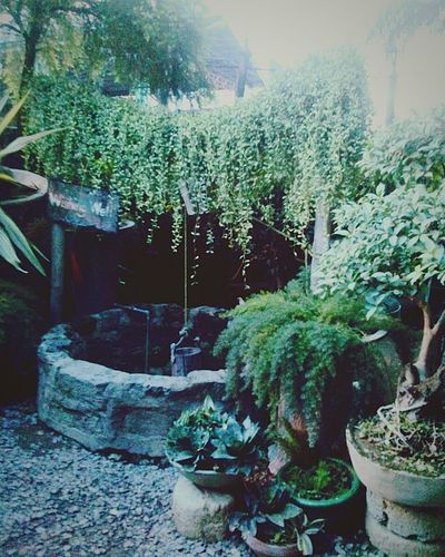 Secret Garden Wishing Well EyeEm Best Shots