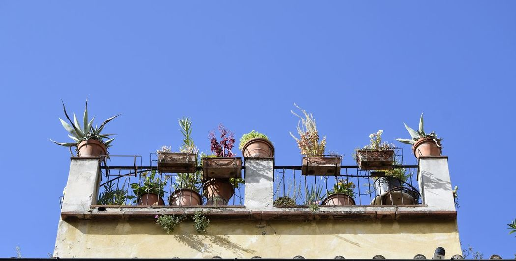 Roof Terrace Low Angle View Blue Travel Destinations Architecture Sky Day Clear Sky No People Building Exterior Outdoors Italy Visit Italy City Florence Lines Plants Looking Up Urban Skyline Urban Nature Lifestyles Nature Tree Potted Plants In Sun Plants And Flowers The Week On EyeEm