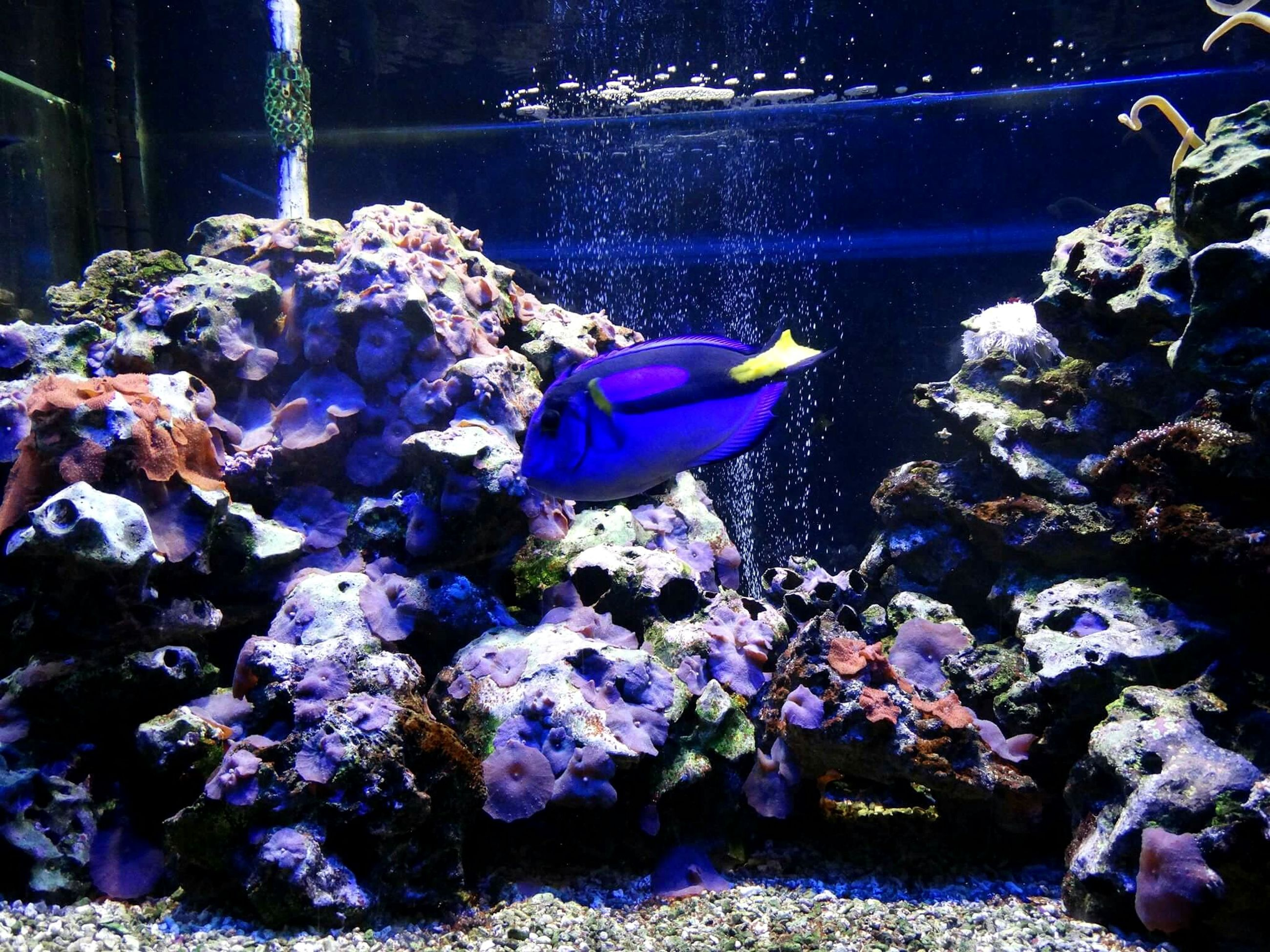 animal themes, animals in the wild, swimming, water, sea life, wildlife, fish, underwater, sea, close-up, nature, undersea, beauty in nature, zoology, togetherness, coral, reef, vibrant color, animal, symbiotic relationship, animal markings