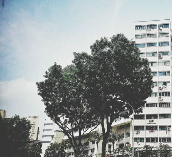 Flats Residences Public Housing Building Design Architecture Building And Trees Nature EyeEm Nature Lover Urban Nature Eyeemphotography