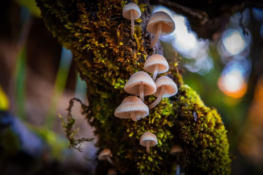 Plant Tree Growth Nature Close-up No People Fungus Beauty In Nature Focus On Foreground Mushroom Day Selective Focus
