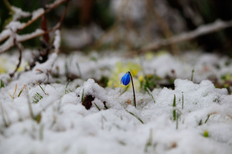 Close-up of snow on field