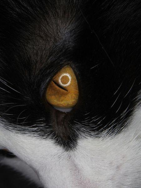 Luna up close Cat Eyes Cats Pets Macro Eye Pet My Cat Olympus Macro Photography Feline
