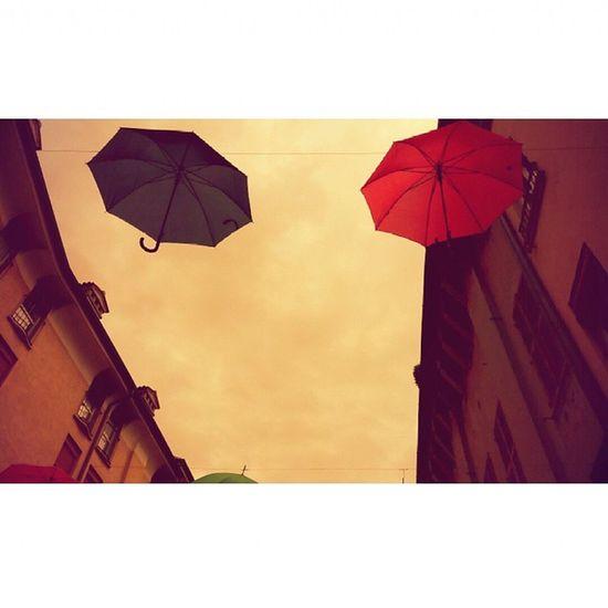 Gliombrelliportanofortuna Ferrara Ferrarasicolora Italy Ferrara FerraraCity 1maggio Ombrelli Bellezze Passeggio Rain Viamo Uncielodiombrelli Colorfulrain Beautifulday 1may Love Goodfeelings Instamood Colori Viamazzini Emiliaromagna Colors Myferrara Comunediferrara