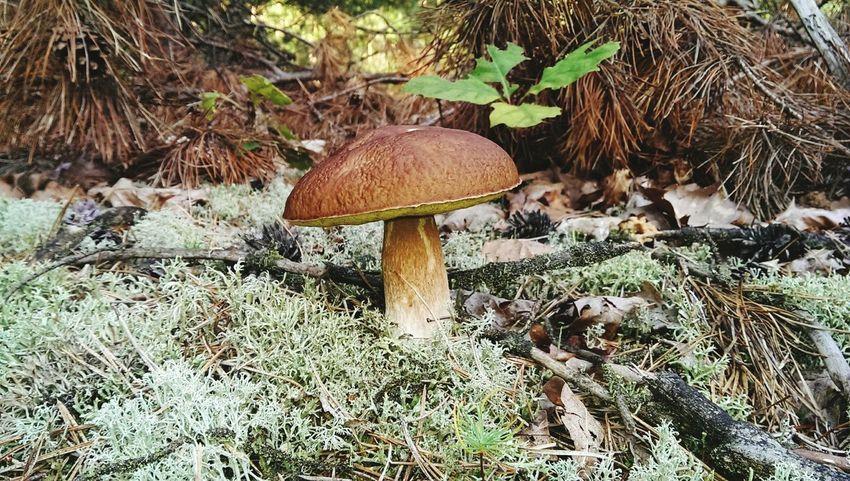 Mushroom Grzyb Las Forest Picking Mushrooms