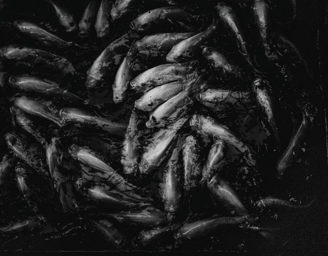 Black and white fishes Human Hand Black Background Full Frame Close-up Abstract Backgrounds