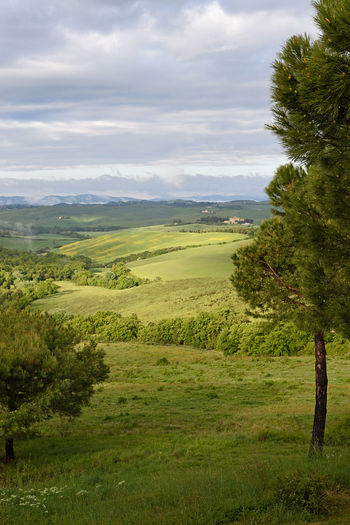 Morning in Tuscany. Landscape with fog Cloudy Field Foggy Morning Grass Green Color Horizon Over Land Landscape Landscape_Collection Landscapes Nature Outdoors Rural Scene Sky The Great Outdoors With Adobe Tree Tuscany Tuscanygram