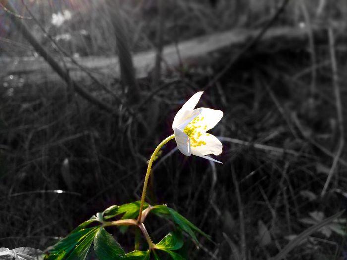 Flower Lonly