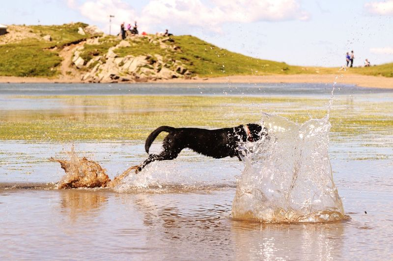 Outdoors Dog Water Swimming First Eyeem Photo