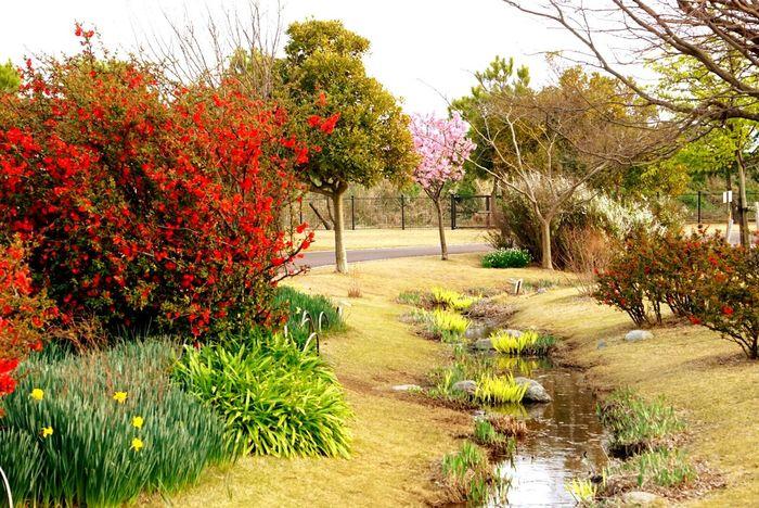 Eyem Gallery EyeEm Best Shots Asian  Shizuoka-shi Japan OpenEdit Free Open Edit EyeEm Garden Photography Garden Spring Spring Flowers Springtime