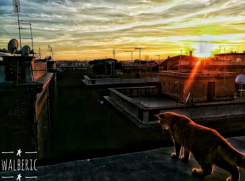 Another World is possible... We begin to imagine. Another World Another Point Of View Changing The World Change Your Perspective ChangeTheWorld Colors Of Life Toghether Imagine Cat Cat♡ Cat Lovers Cats Of EyeEm Urban Exploration Animals Animals Of Eyeem