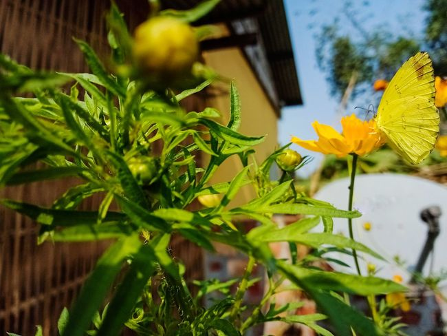 Flower Outdoors Plant Nature Leaf Growth No People Day Green Color Close-up Yellow Freshness Fragility Flower Head Beauty In Nature EyeEmNewHere Be. Ready.