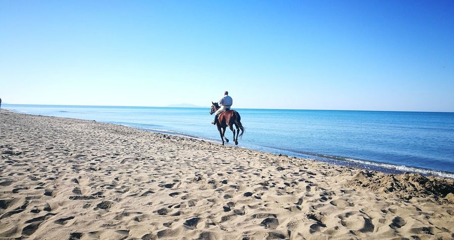 il mare Blue Sky Fusione Beautiful Colors Quadronatural Maremma Toscana Spiaggia🐚 Spiaggia Selvaggia Luce Elementi Naturali Brilliance  Contemplazione Solitude And Silence Sea Full Length Beach Sand Headwear Horseback Riding Clear Sky Riding Horse Sky Horizon Over Water Calm