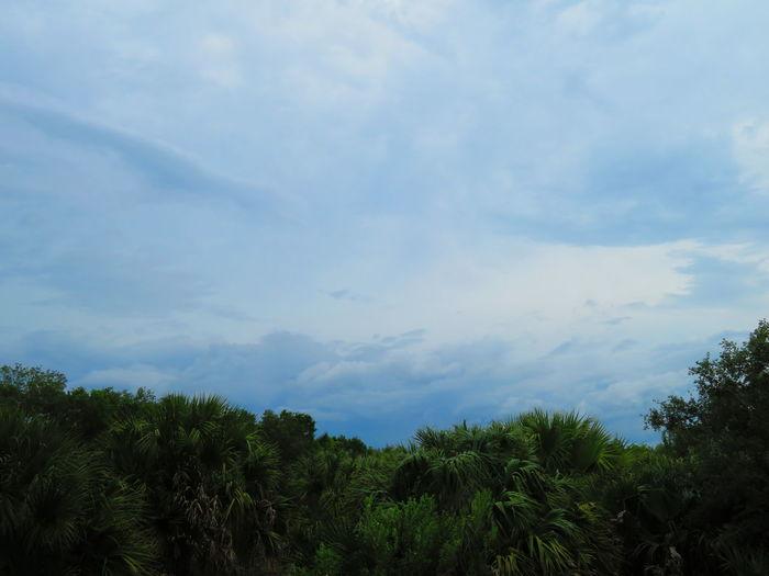 High wind storm on the way Tree Tree Area Forest Blue Sky Cloud - Sky Treetop Glade Storm Cloud Tropical Tree Palm Tree