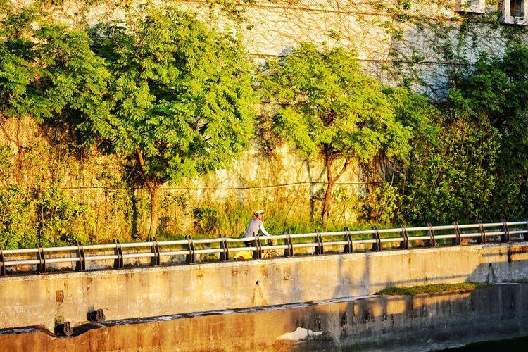 Man walking on bridge against plants
