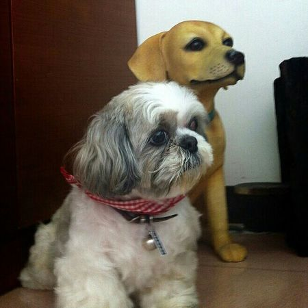 Pets Pet Photography  Mydoggy Boddy