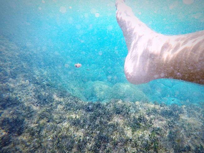 Barefoot Sea Foot That's Me Hanging Out Taking Photos Enjoying Life Nature