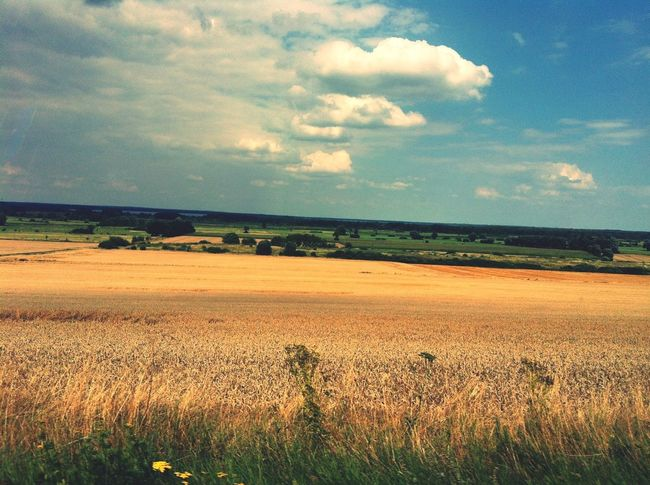 Landscape Schaumburg Harvest