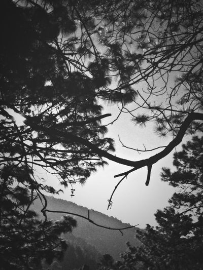 Taking Photos Blackandwhite Photography Thinking About Life SeeTheSky
