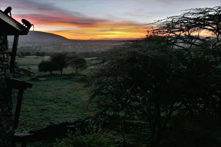 Tanzania Animals In The Wild Apes In Tree Lobo Lodge Lost In The Landscape Paradise On Earth Serengeti National Park Animal Wildlife Beauty In Nature Landscape Mountain Nature Scenics Sky Sunset Tranquil Scene Tranquility