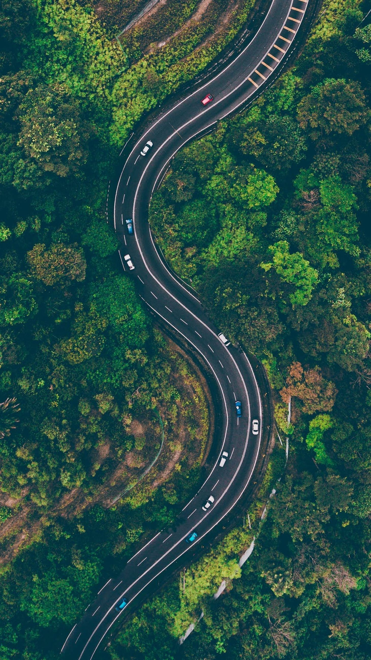 transportation, road, curve, mode of transportation, plant, high angle view, tree, nature, highway, no people, aerial view, car, day, connection, green color, land vehicle, motor vehicle, direction, outdoors, city, multiple lane highway