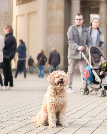 cutie EyeEmNewHere Sonyalpha Berlin EyeEm Selects Dog Pets Togetherness Adult Full Length Happiness Outdoors Domestic Animals City Cheerful Day